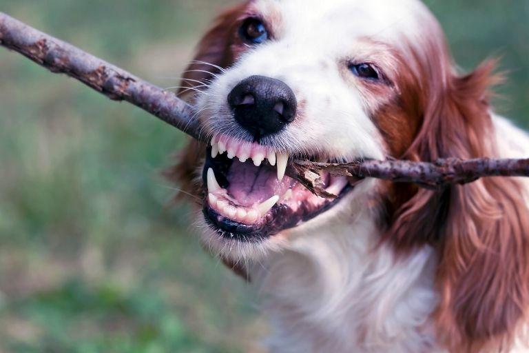 How to Remove Plaque and Tartar from a Dog's Teeth_Walkies and Whiskers