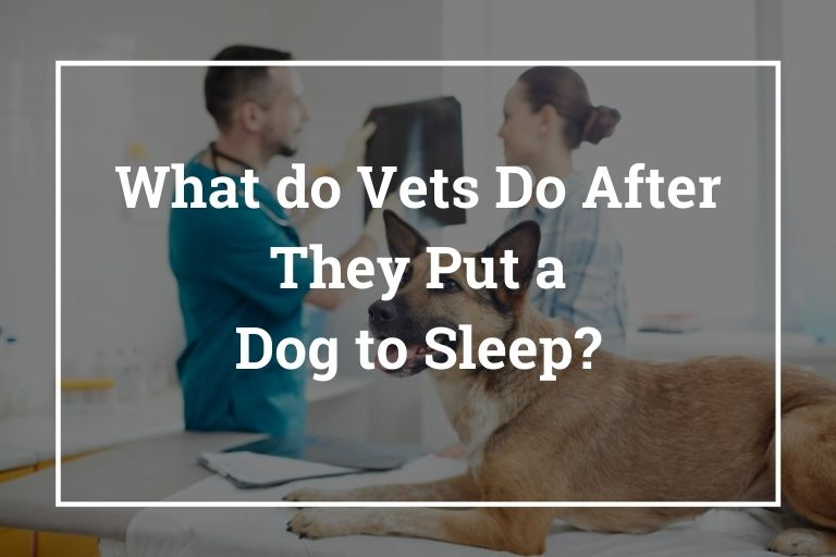 What do Vets Do After They Put a Dog to Sleep_Walkies and Whiskers