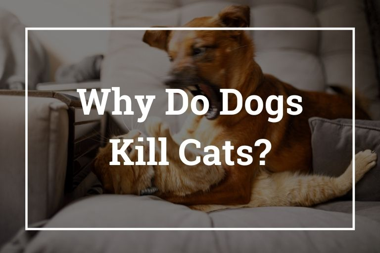 Why Do Dogs Kill Cats_Walkies and Whiskers