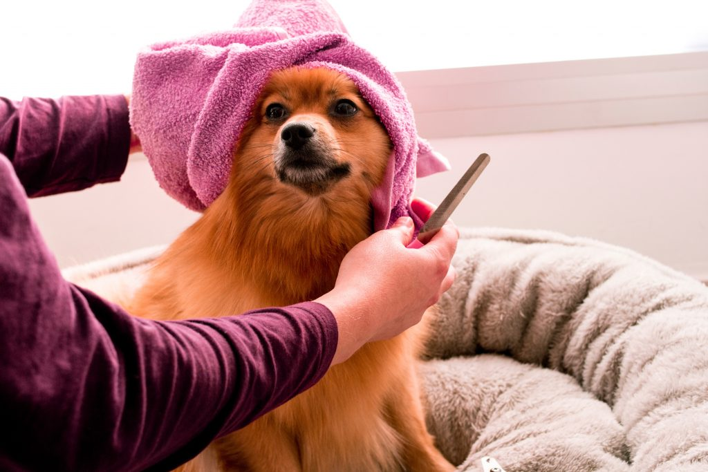 What to Do if Your Dog's Nail Has Ripped Off?